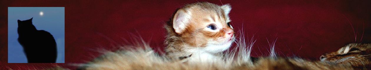 SE*Tavebo katten